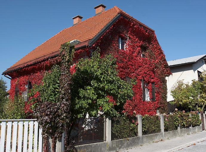 Hiša - jesen