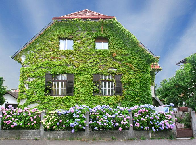 Hiša - poletje