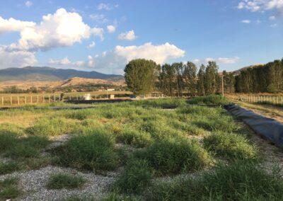 Kuchichino, Severna Makedonija
