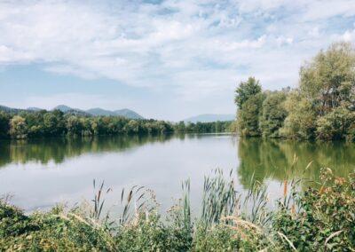 Ekoremediacijski ukrepi za ribnik Vrbje